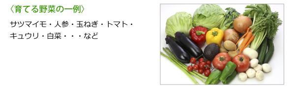 育てる野菜の一例