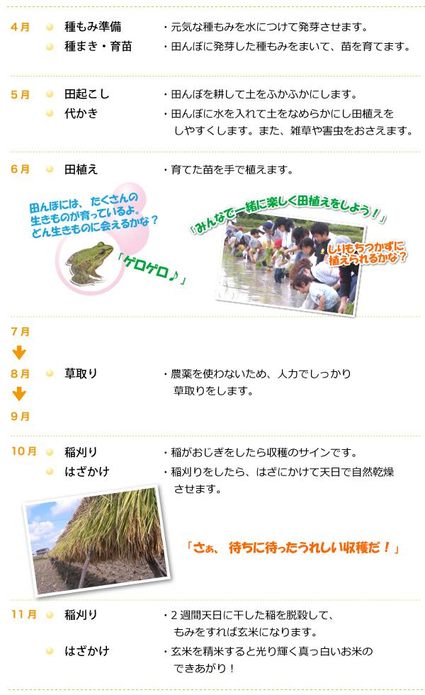お米づくりプログラム